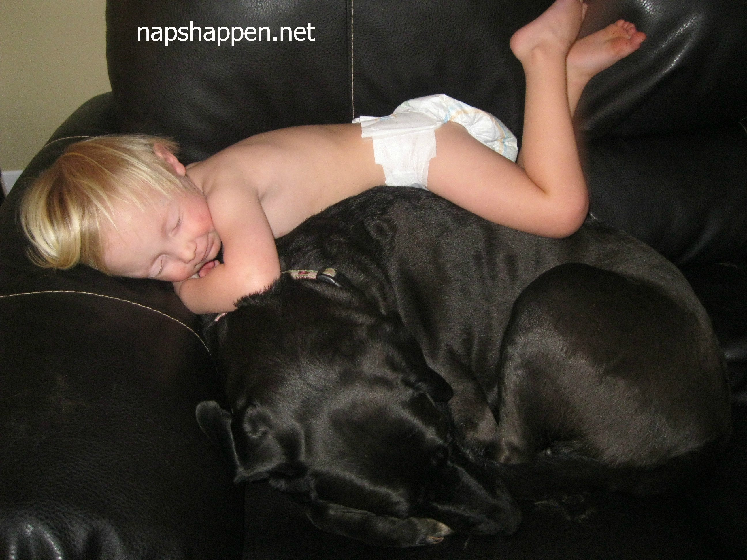 child asleep on dog
